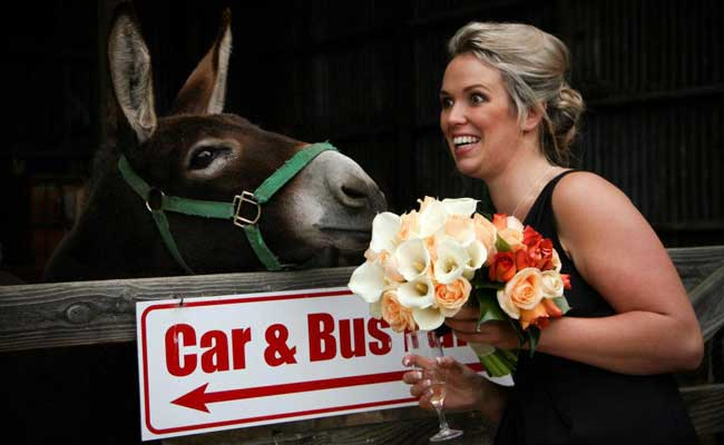 Jenny the donkey has her eye on those tasty looking flowers from Estelle Florist